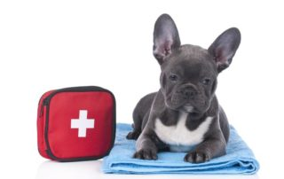 Pet First Aid Kit (Comprehensive)