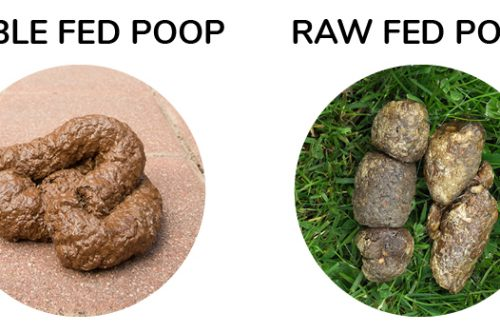 Dog Poop. What Your Dog Eats, Matters!